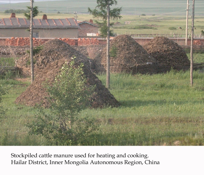 cattle-manure-china_05_b_-101